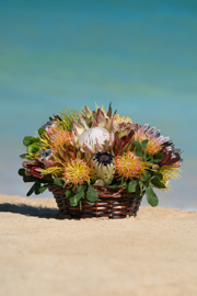 Large Fresh Protea Basket